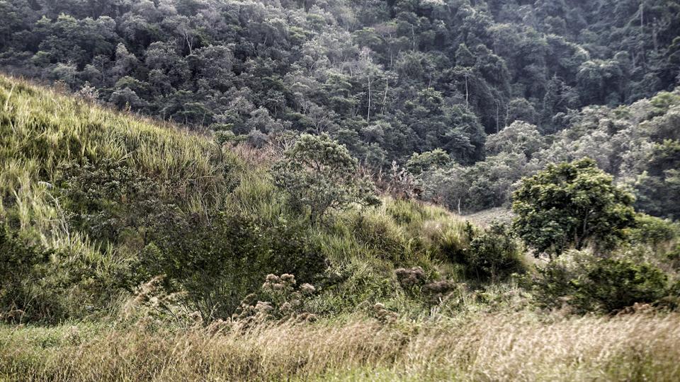 The jungle terrain surrounding Japeri Golf Club.