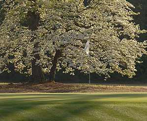 Palmetto Golf Club opened in 1892.