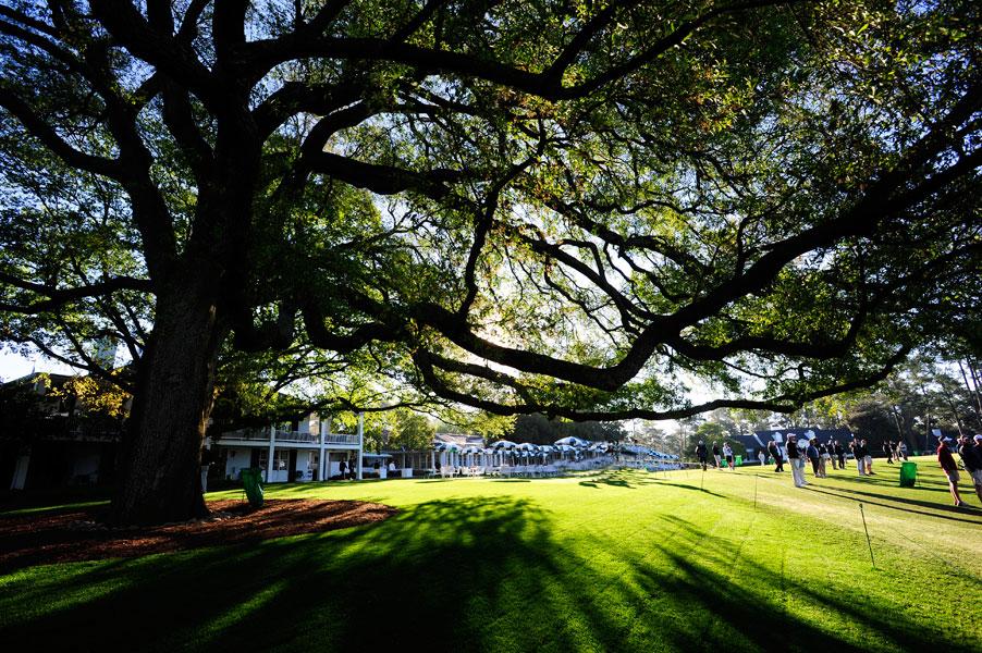 The famed Augusta National oak tree.