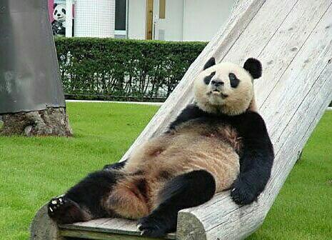 This panda exudes Dufner's carefree spirit.