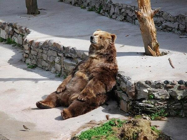 @KeeganBradley retweeted several fan submissions including several animals. First, a bear giving his best #dufnering impression