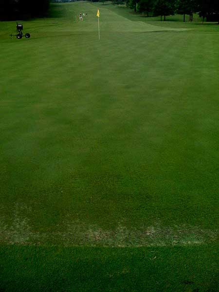 The edges of the greens, especially the high sides, seem to be the most damaged. This is the fifth green.
