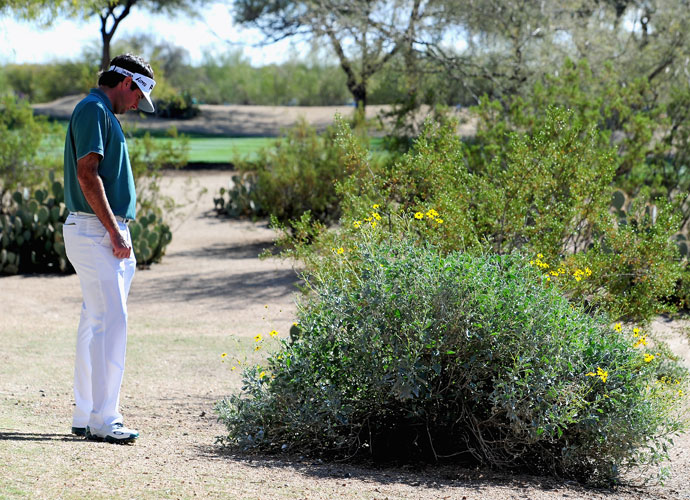 Bubba Watson looks at his ball in a bush on the 13th hole during the third round of the Waste Management Phoenix Open.