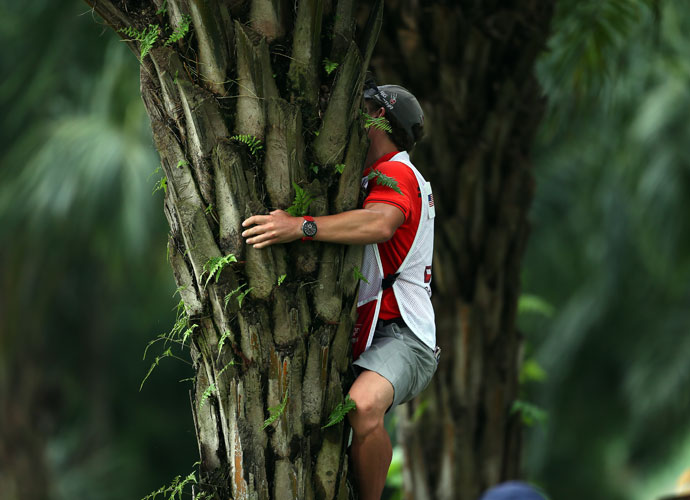 Patrick Reed's caddie climbed a palm tree to retrieve Reed's ball on the 10th hole during the second round. Reed shot a second consecutive 2-under 70 and was T18th, six shots back of leader Billy Hurley III.