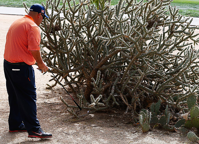 Stadler looks for his ball in a cactus on No. 11. He would double bogey the hole, his only misstep of the round.