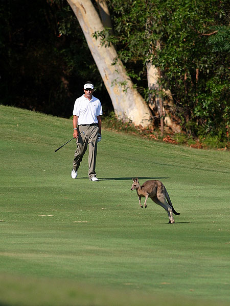 Robert Allenby doesn't look too concerned, so it's probably safe to say this kangaroo crossing his path on the twelfth fairway during the Australian PGA is not making off with his golf ball.