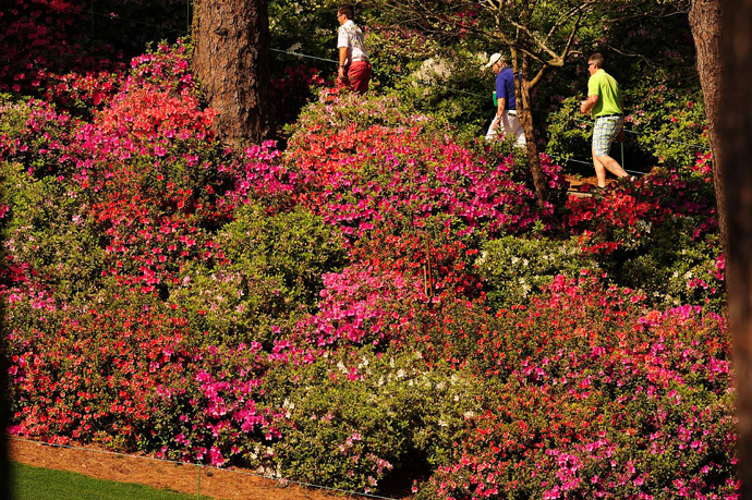 The flowers are in full bloom at Augusta.