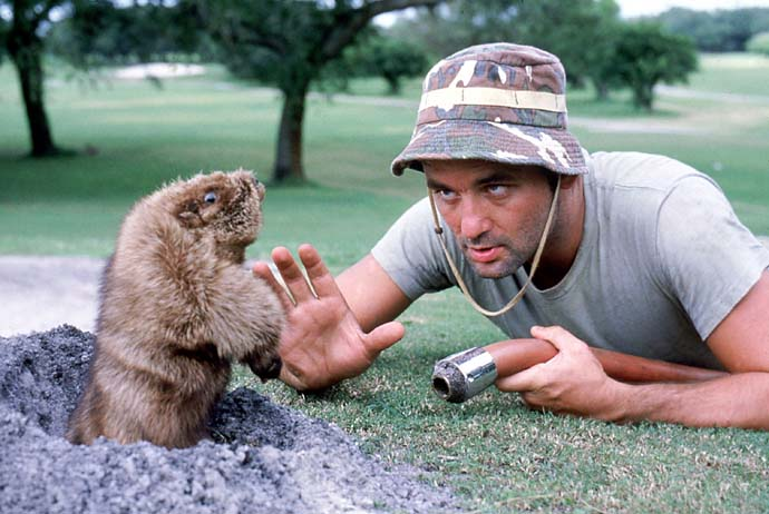 Carl noun course superintendent, inspired by Carl Spackler, from Caddyshack