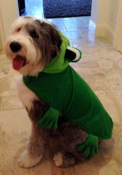 Dustin Johnson: @DJohnsonPGA: Looks like Max is ready for trick-or-treaters!! #Halloween