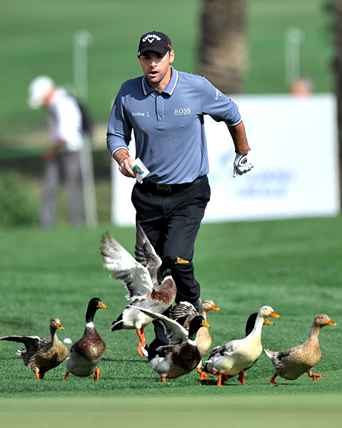 Ducks and geese are always a problem on the course, as Oliver Wilson found out at the 2010 Qatar Masters.