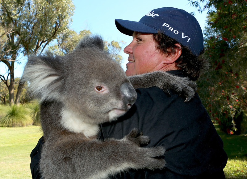 Jason Dufner got a bear hug from a koala after his round at the 2012 Perth International.