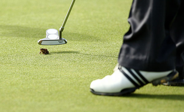A round at Carnoustie usually involves rain, fog and lots of high scores. But during the 2010 Senior British Open a frog had to be gently removed from the putting green.