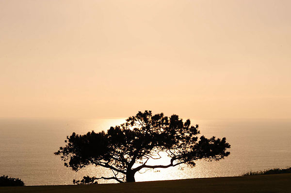 Scenic Shots From Torrey Pines                           SI photographer Robert Beck captured images of the beauty surrounding the U.S. Open at Torrey Pines.The logo for the Torrey Pines golf course is of this tree at the fourth hole.