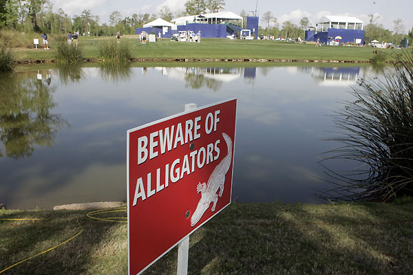 There are more hazards than just water and bunkers at TPC Louisiana.