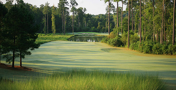 University of North Carolina-Finley Golf Course -- Chapel Hill, N.C.                                   Green fees: $50-$82                                   919-962-2349 -- tarheelblue.cstv.com