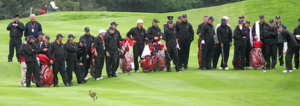 The 2006 U.S. Ryder Cup team watched as a rabbit scampered around the K Club.