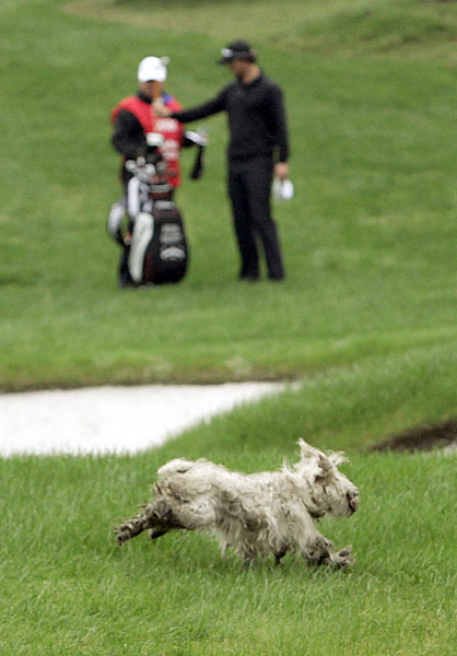 Adam Scott watched a stray dog run across the course at the 2008 HSBC Champions in China.