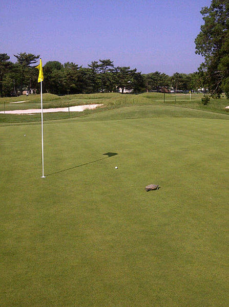 Michelle Wie tweeted this picture of a turtle. Fortunately it was not in her line.