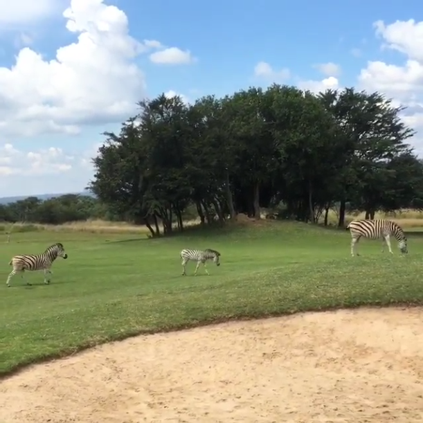 Washington Redskins WR Andre Roberts had some interesting company for his foursome in South Africa.