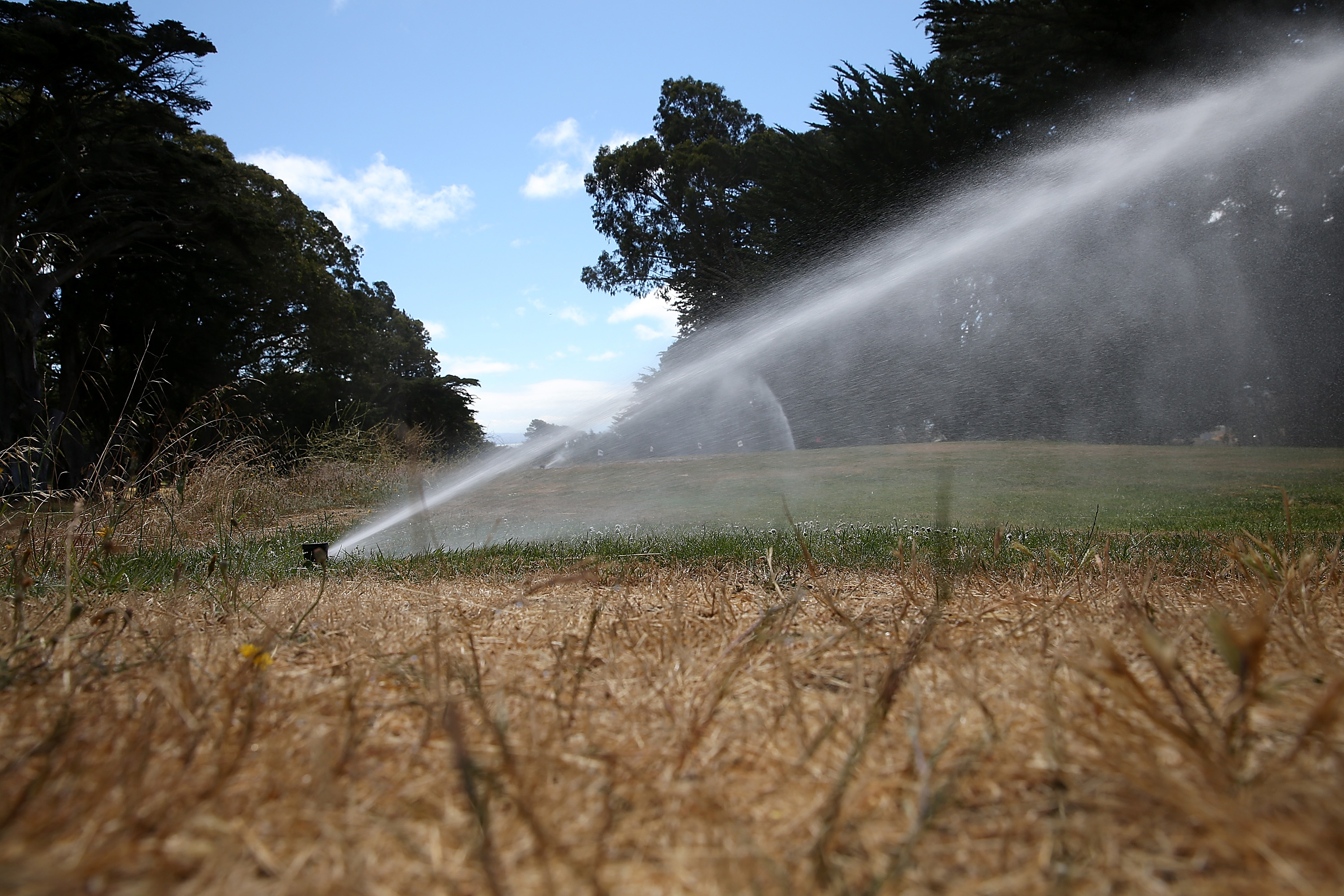 A tee box is watered by a sprinker at Gleneagles Golf Course in San Francisco in July.