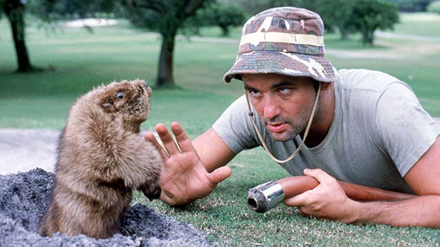 Bill Murray's character in 'Caddyshack' took his greenskeeper role a little too seriously.