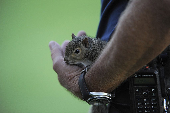 golfers and baby animals  the best photos