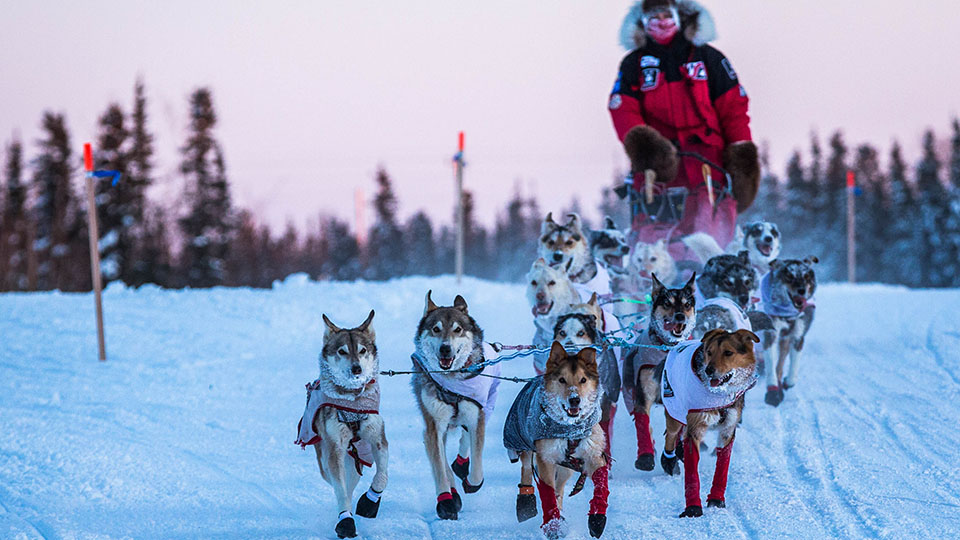 Aliy Zirkle and her team arrive at the Huslia, Alaska, checkpoint for the 2015 Iditarod Trail Sled Dog Race.
