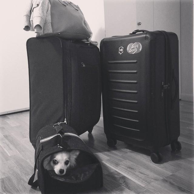 Ready to go! Vacation time! Bye bye NYC! See you soon Ibiza, Porto, Algarve e Alentejo #luigisampaio