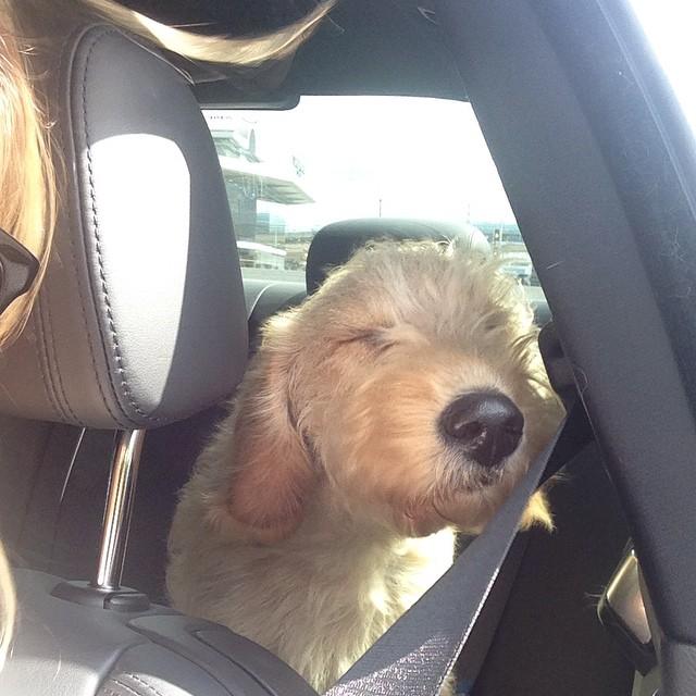 One more happy #nationaldogday to a favorite, this little guy #rambosoler #hairblowinginthwwind #cruising @katecanestri