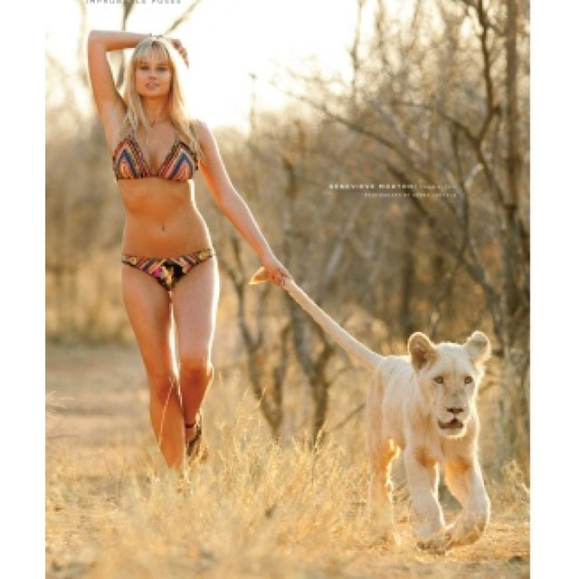 #WorldLionDay #5forBigCats @NatGeo We love big cats at @si_swimsuit @genevievemorton
