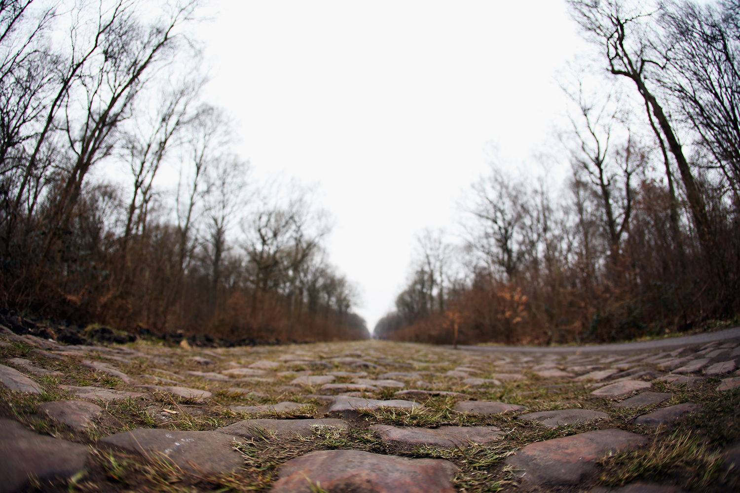 Not all cobbles are created equal. Paris-Roubaix rates the difficulty of each secteur of pave. Among the most difficult: the jutting, irregular stones awaiting riders in the Forest of Arenberg. The race is not decided there, but Arenberg is where the group containing the winner is often selected.