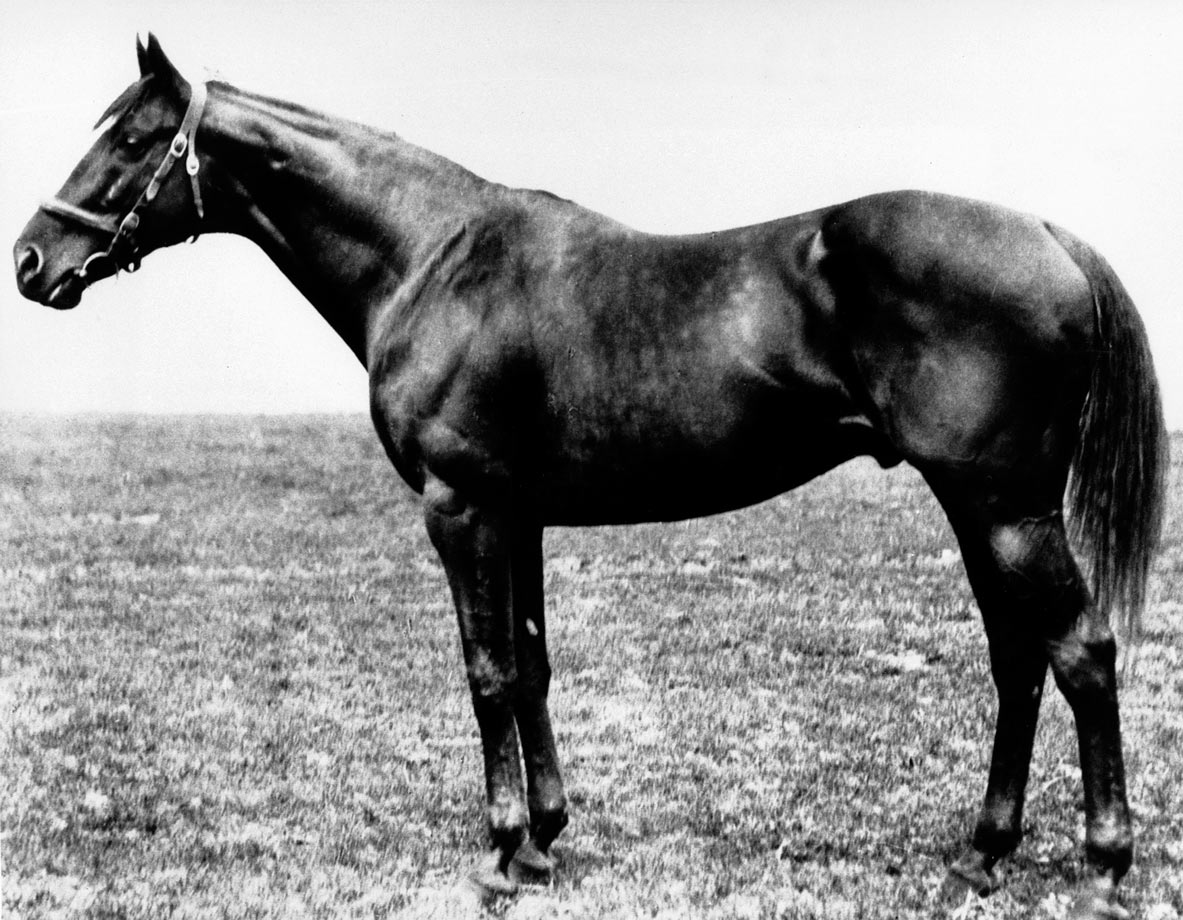 Ridden by Johnny Loftus, Sir Barton was the first to win the Kentucky Derby, Preakness Stakes and Belmont Stakes in the same year. The formal name of Triple Crown wasn't used until 1930.