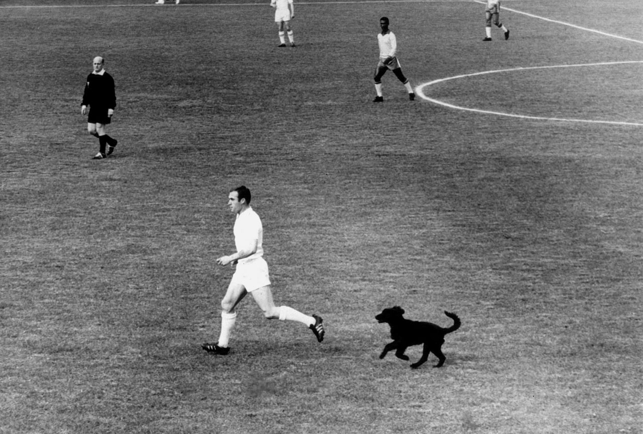 Englishman Ray Wilson gets chased by a dog named Bob who wandered onto the pitch during England's quarterfinal clash with Brazil in the 1962 World Cup.