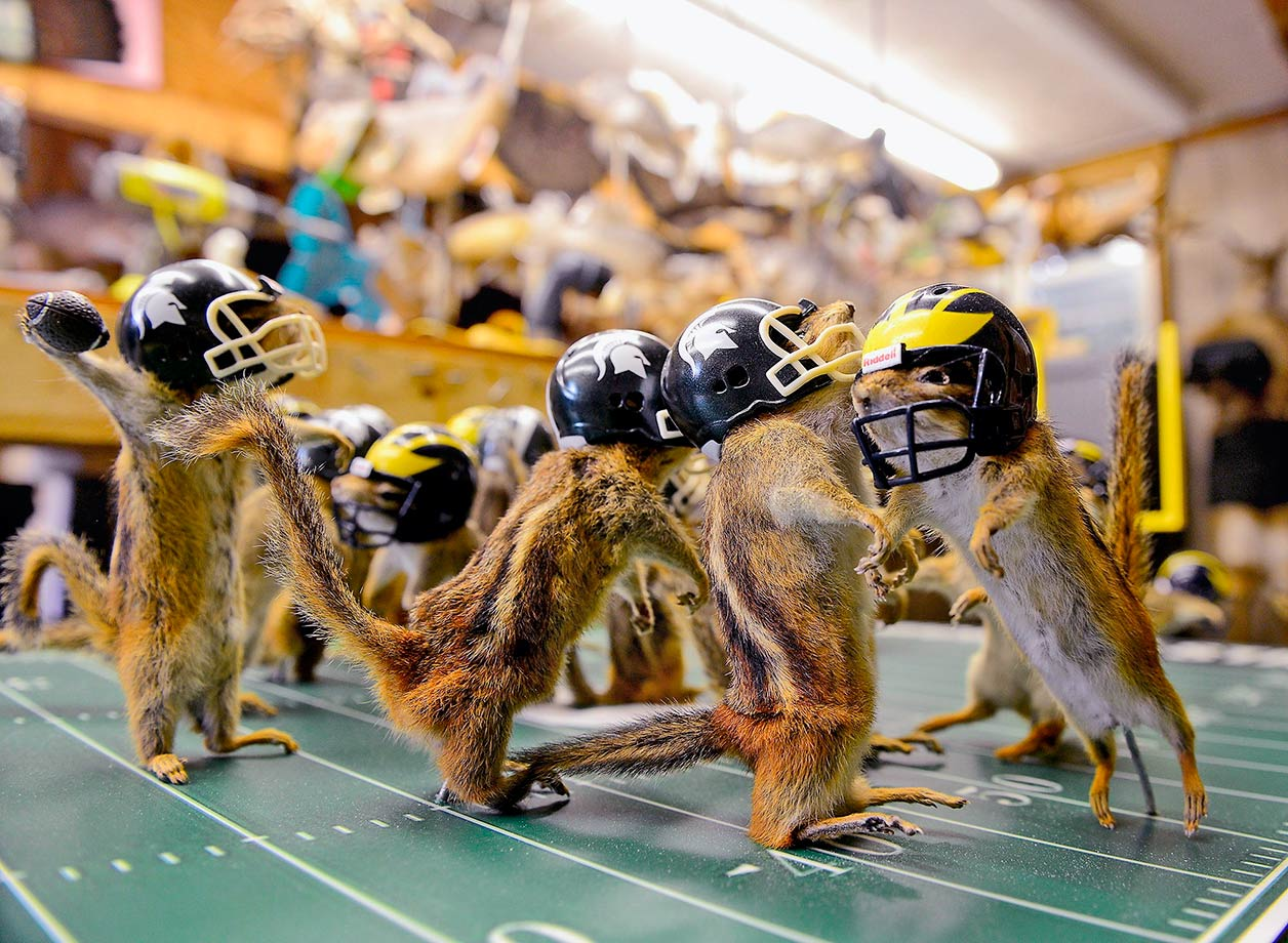 A Lansing taxidermist built a Michigan-Michigan State football tableau out of 22 dead chipmunks.