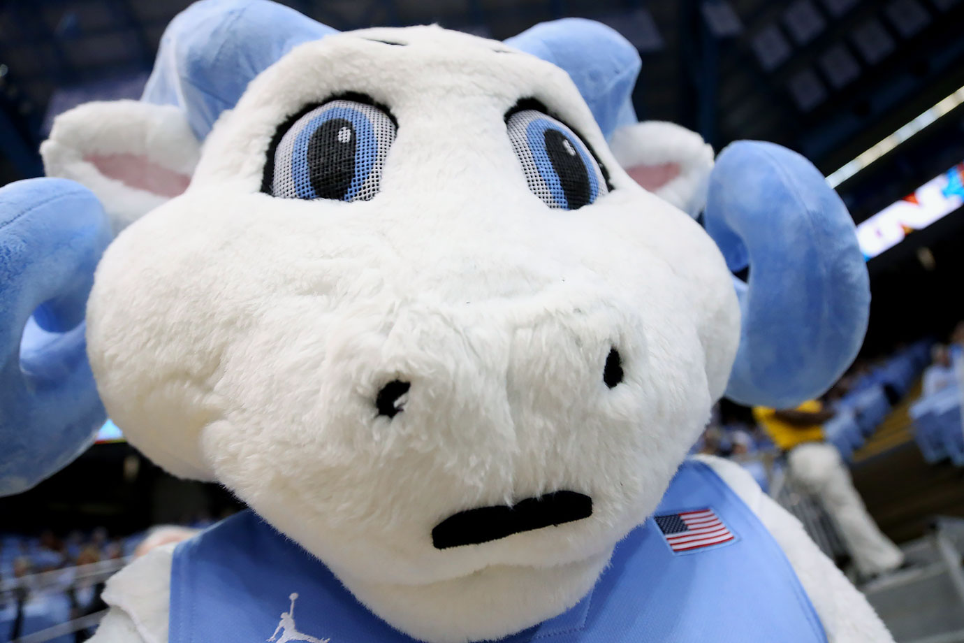 Less than a month after his debut, North Carolina mascot Ramses Jr. has already managed to grow a mustache.
