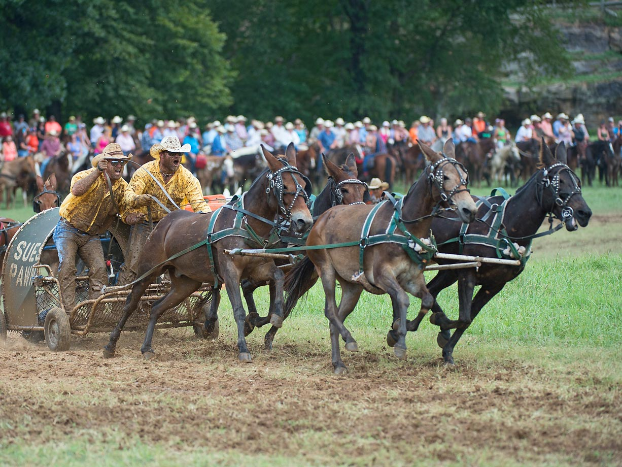 """Sues Pawn Express"" Rider Steven Mcelroy and his cook Jeremy Sumler race in the four up Mule Division. Mules can be positioned 4 across or 2 up 2 back as displayed here."