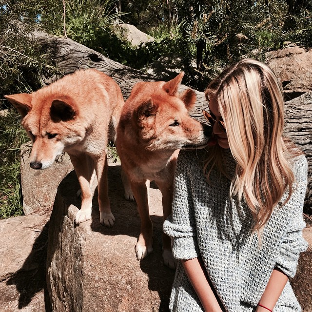 part of the pack #healesvillesanctuary #dingos
