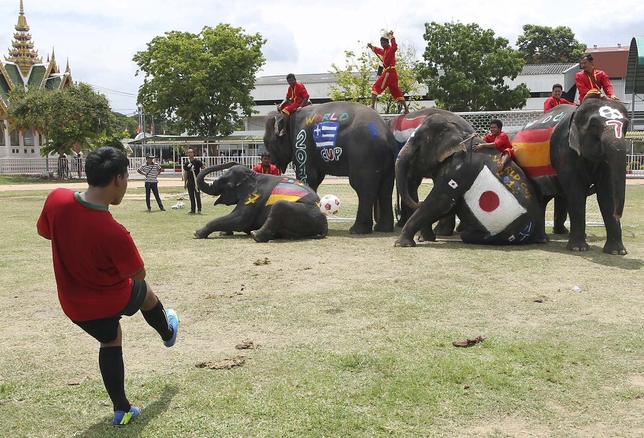 A Thai youth kicks the ball as five elephants block the goal during a soccer match between men and elephants on Monday, June 9, organized by Ayutthaya Elephant Camp to celebrate the World Cup soccer tournament.