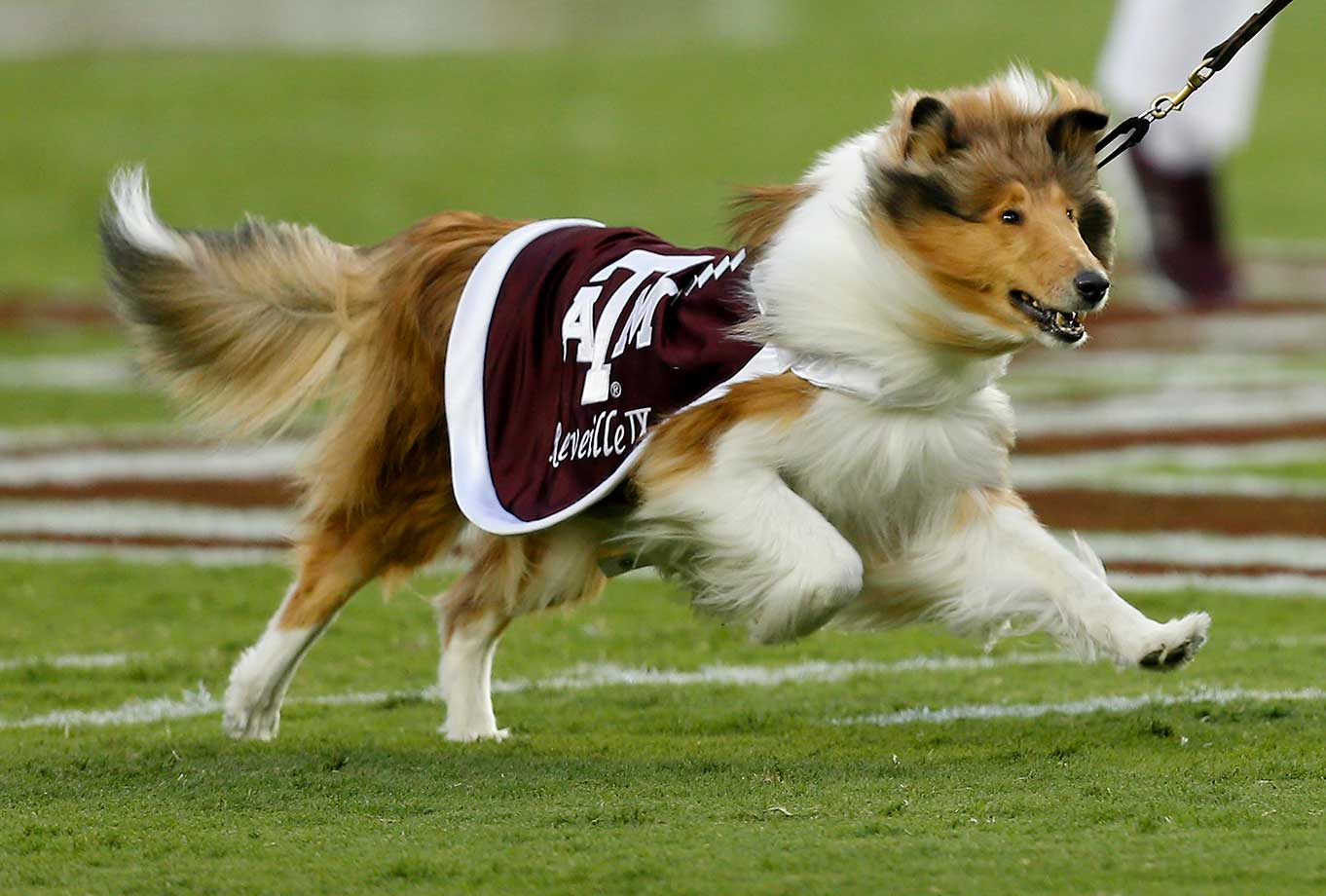 No. 9: Reveille is a fun mascot for Texas A&M and the Aggies because she's a living, breathing dog. Beautiful and elegant, she's a good change-up from typical costumed mascots. (Text credit: Andrew Wittrey/SI.com)