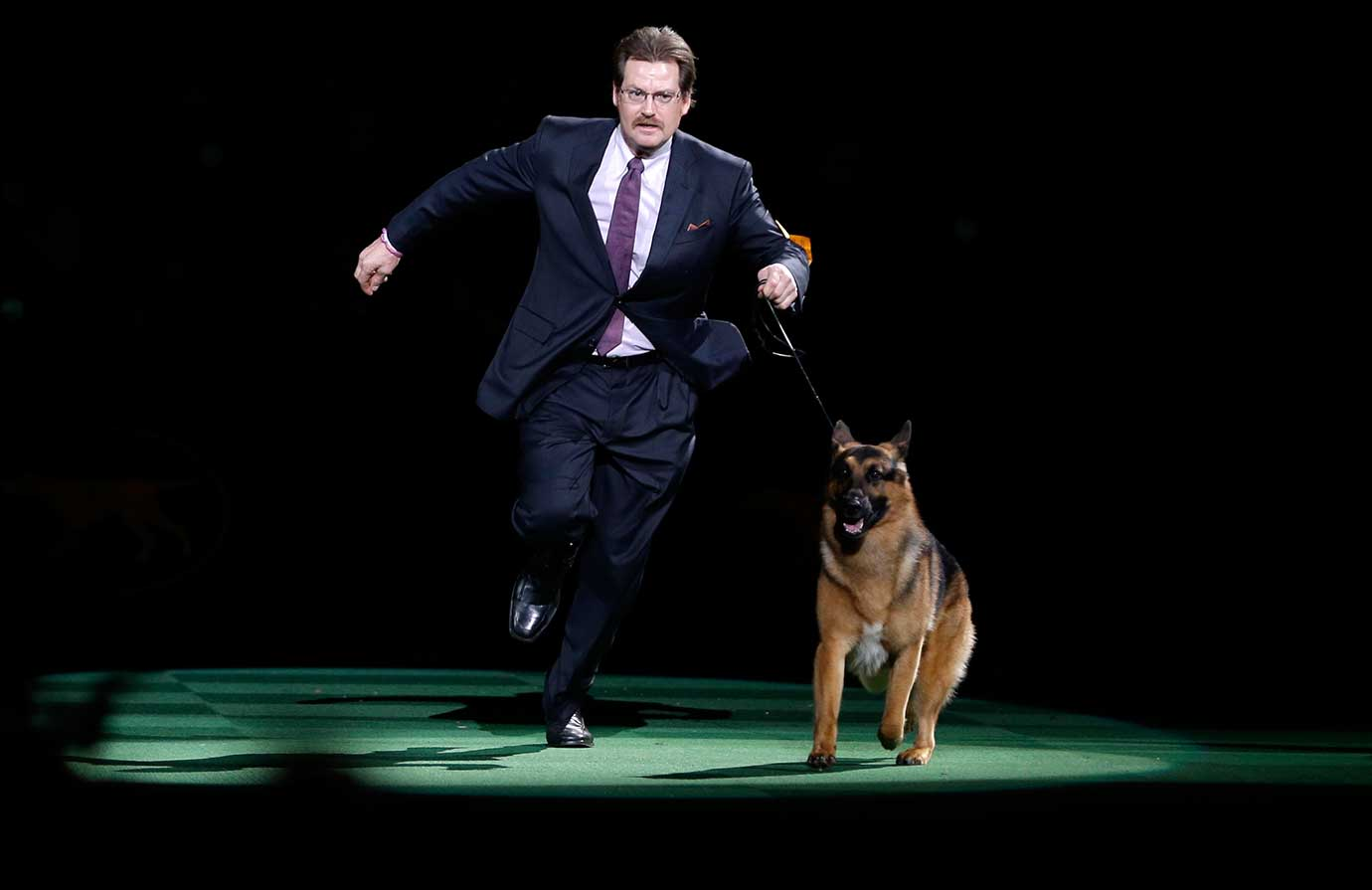 Rumor, a German shepherd, and Kent Boyles take a lap during the best in show competition.