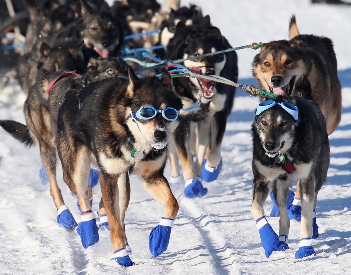 Rookie musher Cody Strathe and his dogs make their way through Long Lake, Alaska, during the 44th Iditarod.