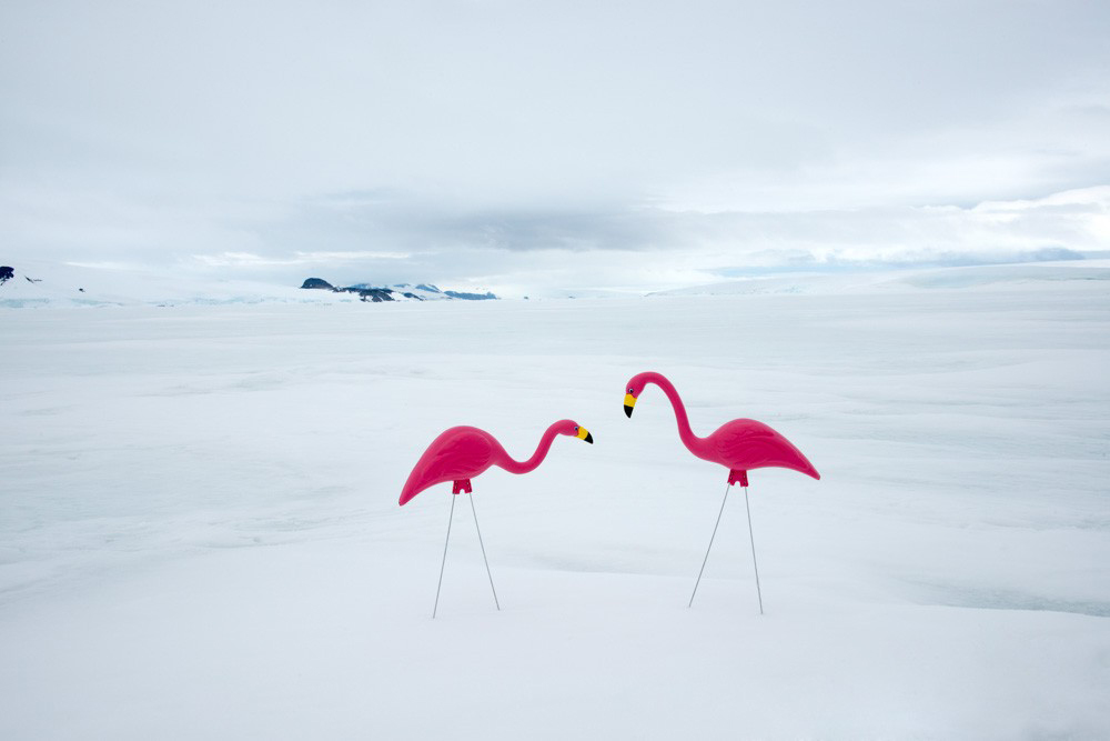 """TWO FLAMINGOS"""