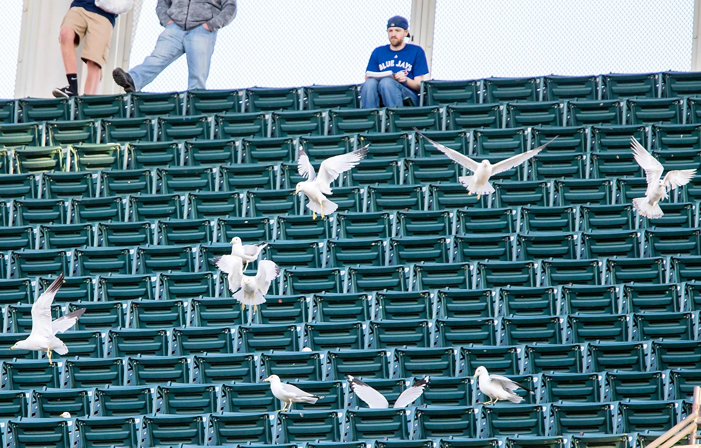 A flock of seagulls apparently scared away all the Blue Jays fans during a game against the Indians.