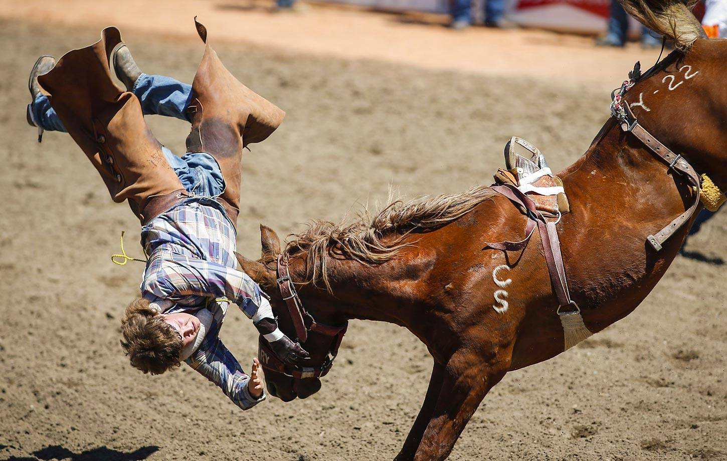 Brendon McCallum comes off Yucatan Margie during the novice bareback competition at the Calgary Stampede rodeo in Alberta.