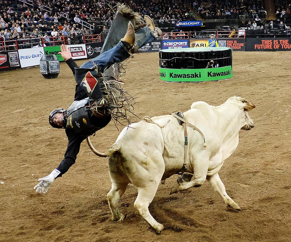 "Bull rider Zane Lambert gets bucked off ""Gonzo"" at the Professional Bull Riders Monster Energy Buck off at Madison Square Garden."