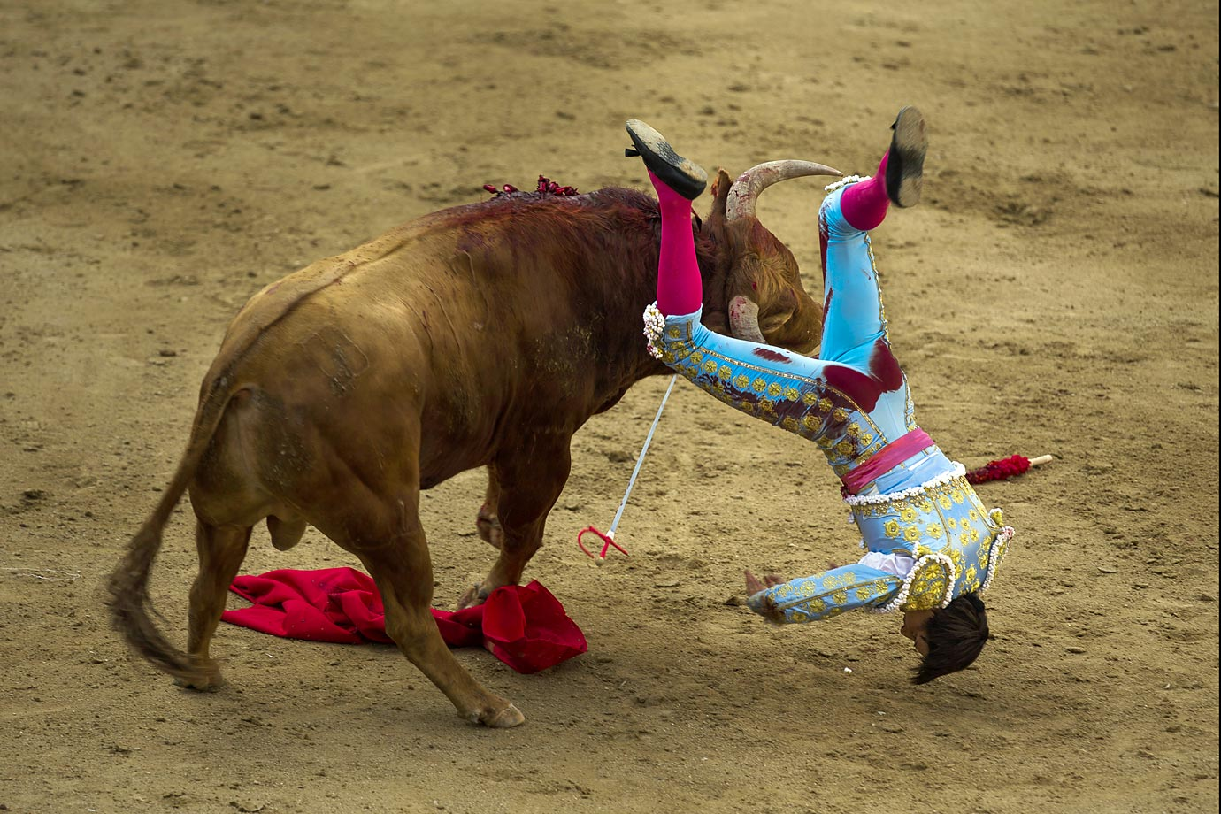 Andres Roca Rey is tossed from a bull during at the Las Ventas bullring in Madrid, Spain.