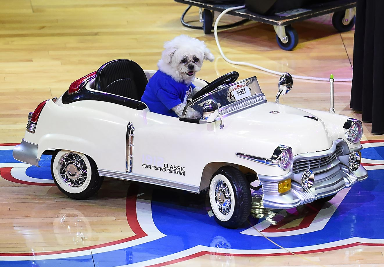 A dog performs during a halftime show at Staples Center.