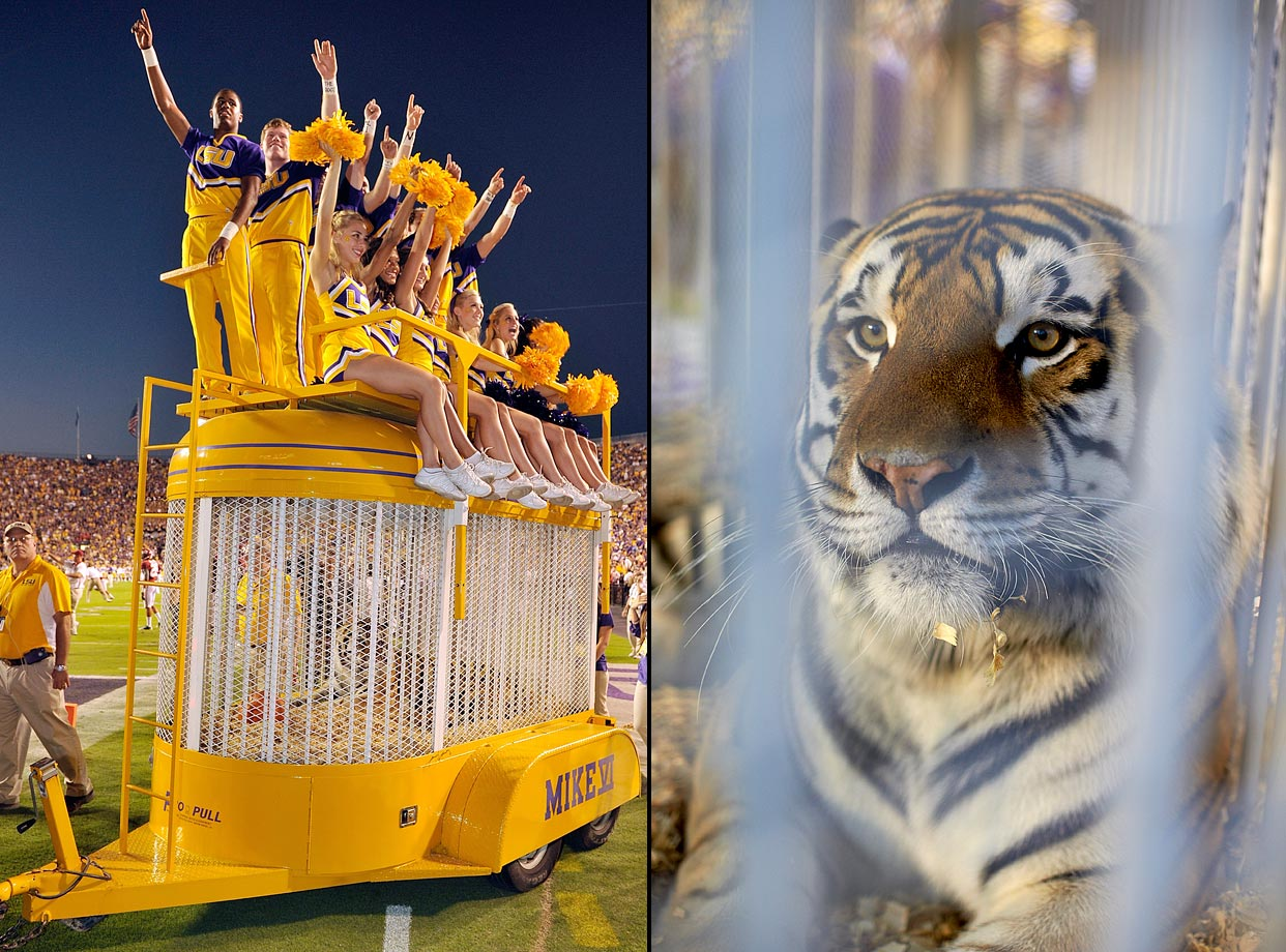 #3: LSU's Mike the Tiger — College students near a real-life tiger. What could go wrong?