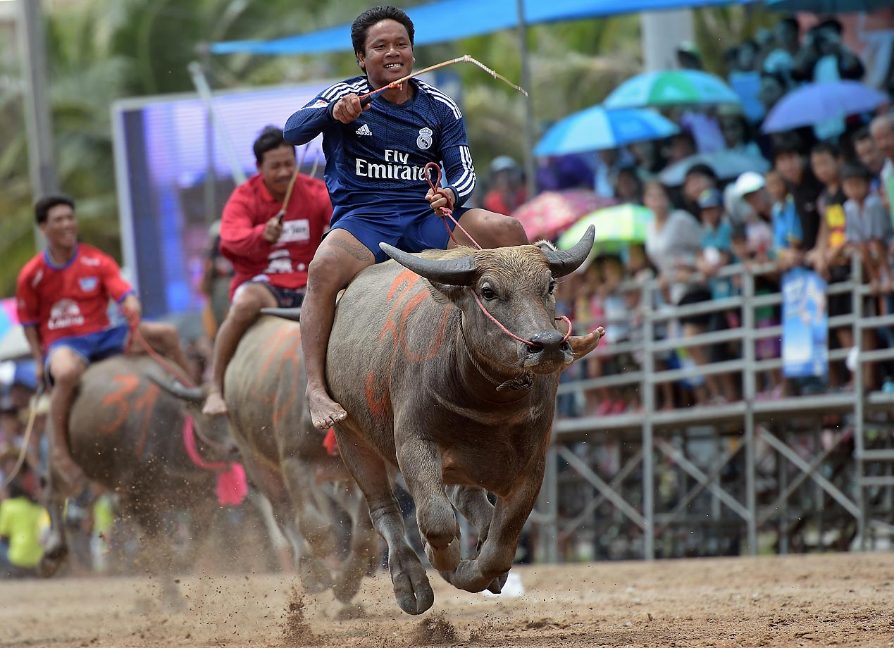 The annual buffalo races in Chonburi, southeast of Bangkok, on Oct. 7.
