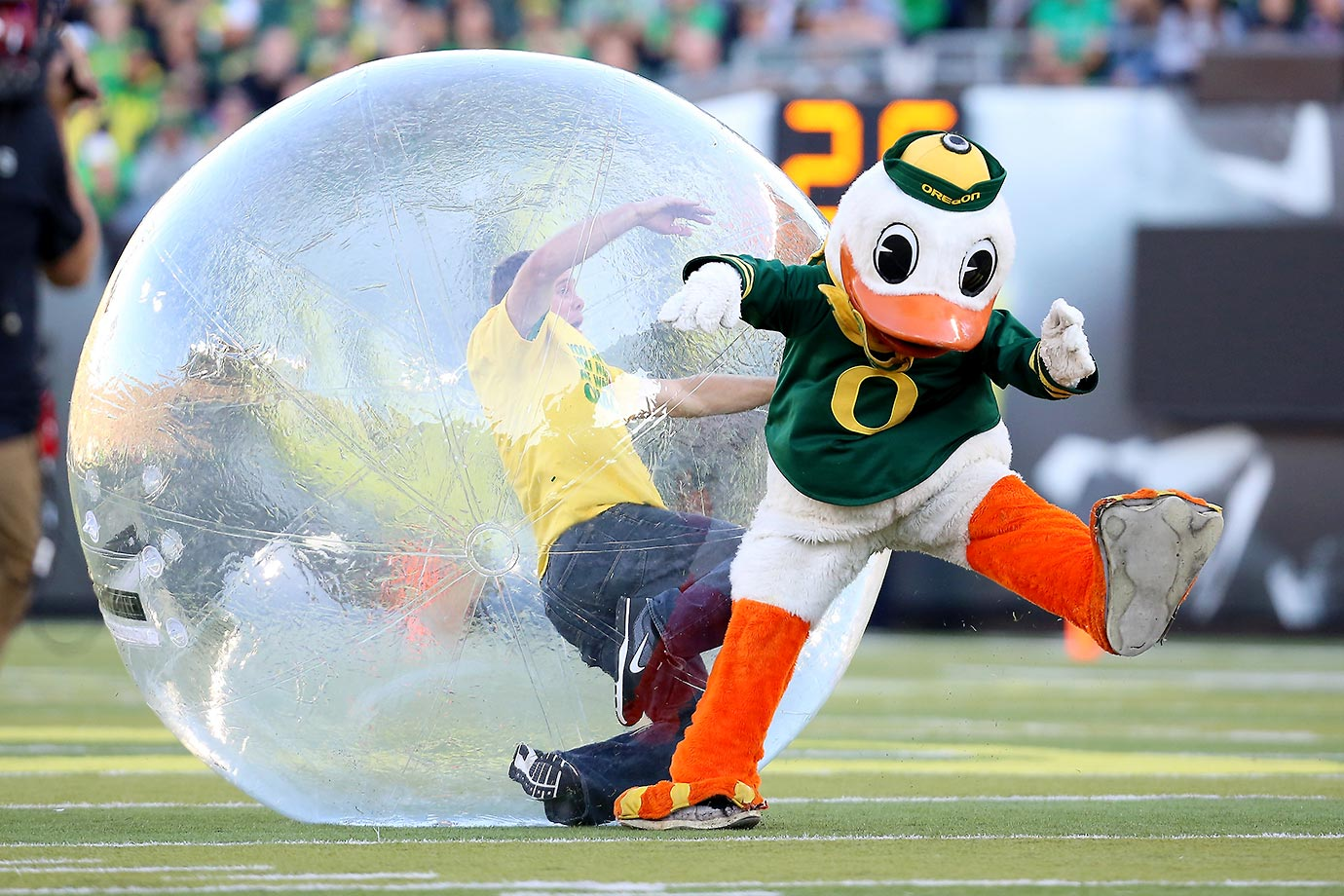 The Oregon mascot on the field with a fan during a timeout.